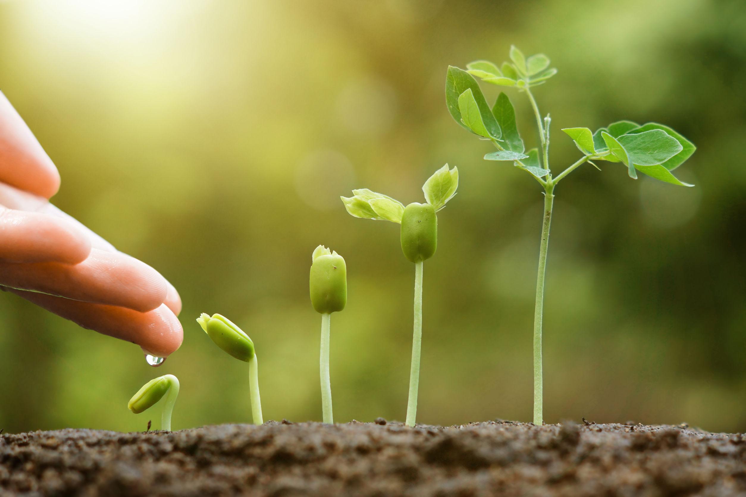 lead nurturing webinar